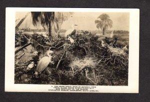 SC Heron Bird Charleston Museum South Carolina Real Photo Postcard RP RPPC