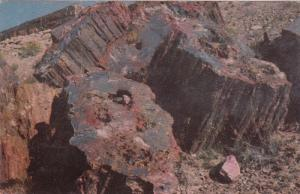 Petrified Forest, Arizona, Union 76 Oil Company, 40-60s