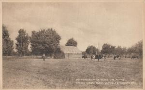 OAKVILLE, Ontario, Canada,1900-10s ; Cattle at Walker House Farm