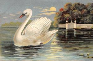 White Swan Close Up on Moonlit Water~Grecian Balustrade on Pond~Emboss~ASB 336