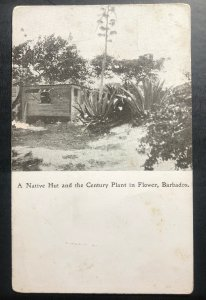 Mint Barbados Real Picture Postcard Native Hut & Century Plant Flower