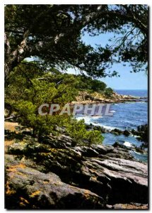 Postcard Modern Pinede and cove of the Mediterranean Riviera