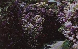 Illinois Lombard Beautiful Walk In Lilacia Park