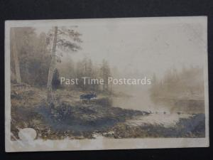 Denmark: Old Real Photograph Postcard of a MOOSE by Water
