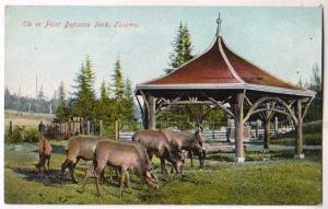 Elk in Point Defiance Park, Tacoma Wash