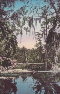 Florida Wakulla Jungle Vista Albertype