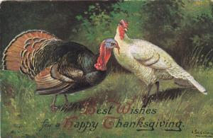 Best Wishes fro a Happy Thanksgiving, Wild Turkeys, 00-10s