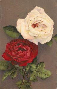 Flowers. Roses Beauiful Swiss postcard 1950s