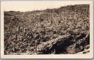 Vintage 1920s ARIZONA Real Photo RPPC Postcard A CACTUS FOREST Unused