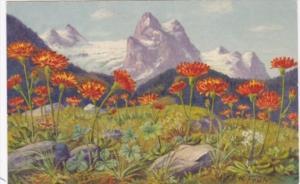 Switzerland Hieraclum Alpinum Alpine Flowers