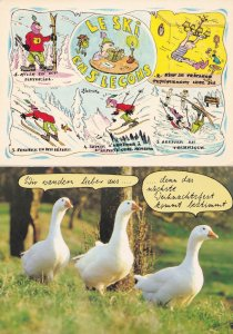 French Skiing Swans Birds 2x Comic Postcard s