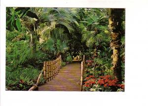 Bamboos Bridge, Palms, Bloedel Conservatory, Vancouver British Columbia, Phot...