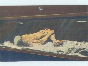 Pre-Chrome MUSEUM SCENE Mammoth Cave National Park - Cave City KY AH5788