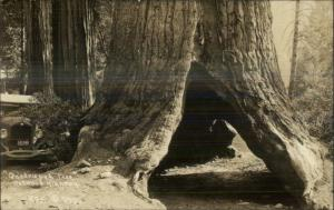 California Redwoods Car License Plate Visible c1930 Real Photo Postcard