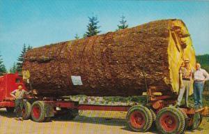 Oregon Giant Fir Log On Truck