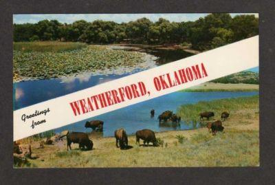 OK Greetings from WEATHERFORD OKLAHOMA Postcard Buffalo