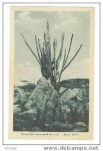 Catus tree surrounded by rocks, Aruba, N.W.I., 20-40s