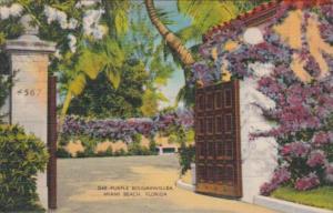 Florida Miami Beach Purple Boubainvillea 1941