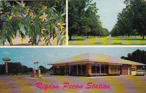 Georgia Fort Valley Rigdon Farms Pecan Station 1961