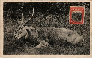 PC CPA MOZAMBIQUE, A WATER BUCK, VINTAGE POSTCARD (b20757)