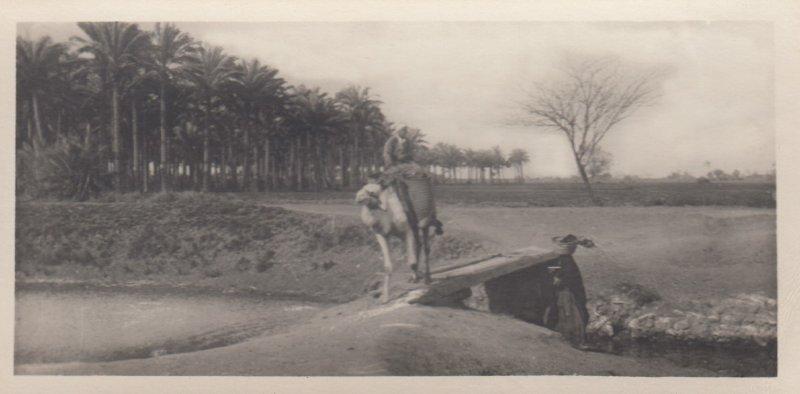 RP: EGYPT , 00-10s ; Cairo , Camel traversing the road of Memphis