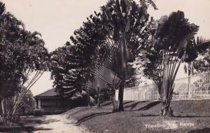 Singapore Malaya Traveling Tree Real Photo Old Postcard