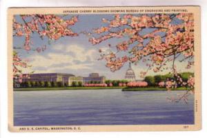 Japanese Cherry Blossoms Bureau Engraving and Printing Washington DC,