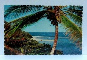 Portland Jamaica San San Bay Palm Tree Ocean View Postcard
