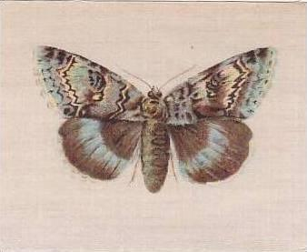 R J Lea Golden Knight Vintage Silk Cigarette Card Butterflies The Clifden Non...