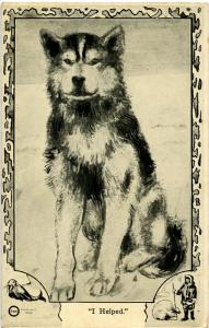 Dog -  I Helped Alaskan Husky, Poem