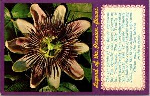 Postcard Legend of Passion Flower Passiflora Incarnata Florida Christian 1684
