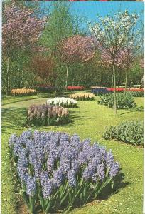 Netherlands, Keukenhof, Lisse-Holland, unused Postcard