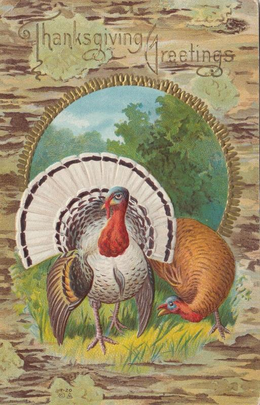 THANKSGIVING Greetings; PU-1913; Wild Turkeys