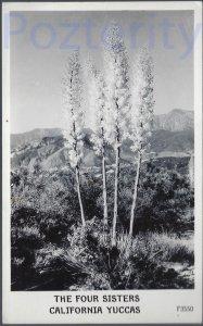 THE FOUR SISTERS CALIFORNIA YUCCA'S RPPC CALIFORNIA DESERT