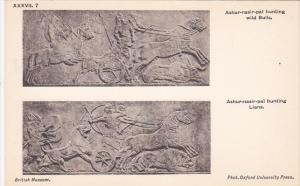 Palace of Assur wall panel , Iraq , 00-10s :Ashur-nasir-pal hunting bulls & L...