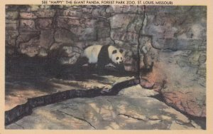 ST. LOUIS, See Happy The Giant Panda at Forest Park Zoo, Missouri, 30-40s