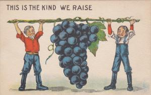 1900-1910's; This Is The Kind We Raise, Two Men Lifting a Grape Vine
