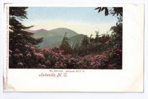 Asheville NC Mt. Mitchell UDB Leighton c 1907