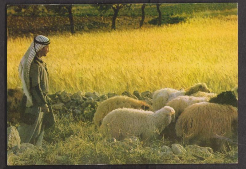 Shepherd's Field In Bethelem - Unused 1950s