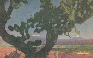 Volcanes Y Nopales Mexico Old Painting Postcard