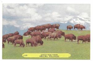 Buffalo, Denver, Colorado,Rembrant Chome