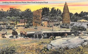 Zoos African Plains New York Zoological Park, USA Unused