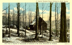 VT - Maple Sugaring. Orchard Scene in Early Spring