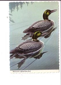 Minnesota's Official State Bird Loons