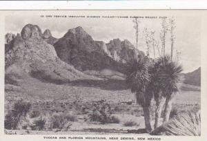 New Mexico Deming Native Jucca Plant Albertype