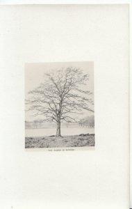 Trees Postcard - The Alder in Winter - Ref 2040A