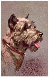 Dog Schnauzer