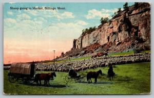 Billings Montana~Sheep Going to Market~Covered Wagon & Horse Buggy~c1908 PC