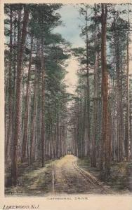 Hand Tinted Scenic View, Tree Lined (Dirt Road) Cathedral Drive, Lakewood, Ne...