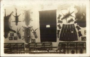 Warren NH Morse Museum Animal Pelts Taxidermy Real Photo Postcard